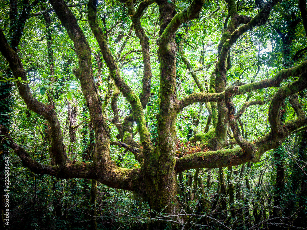 Fototapeta outdoor image of old trees, covered with moss, mysterious forest - fantastic realism in nature