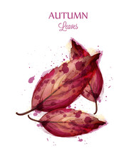 Autumn Watercolor Leaves Vector Isolated On White Background. Fall Banner Template. Red Colors
