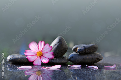 Photo Black spa stones and pink cosmos flower isolated on green.