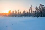 Edge of the Winter Northern Forest and the Sunset Behind the Pines