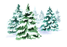 Winter Forest. Christmas Fir Tree. Watercolor Hand Drawn Illustration, Isolated On White Background