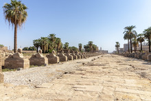 Sphinxes Road At Entrance To Luxor Temple, A Large Ancient Egyptian Temple Complex Located On The East Bank Of The Nile River In The City Today Known As Luxor (ancient Thebes).