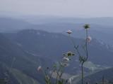 drakiew.kwiaty Małej Fatry