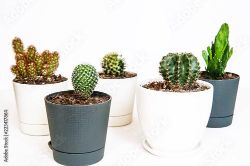 Foto op Plexiglas Cactus Cactus. Small cactus style with retro filter effect. Green Mood.