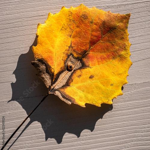 Fotografie, Obraz  Blatt in Herbstfarben