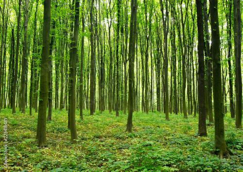 Spoed Foto op Canvas Weg in bos forest green