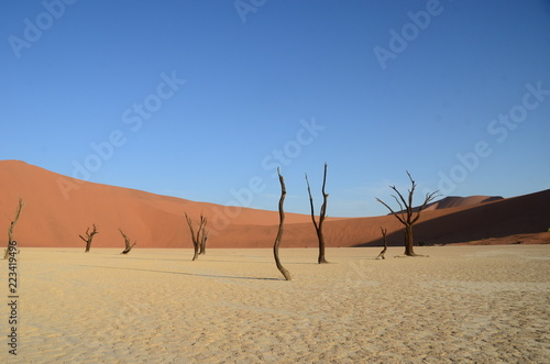 Foto op Canvas Droogte Dead Vlei in Namib desert, Namibia, Africa