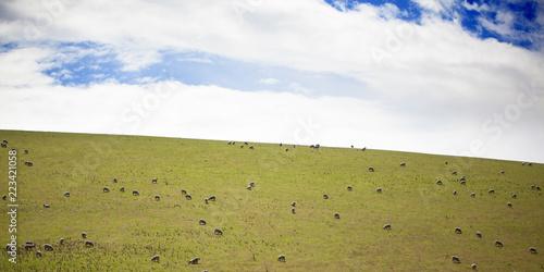 Fotografía  Rebaño de ovejas