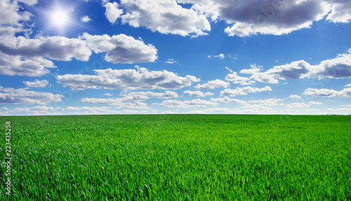 Image of green grass field and bright blue sky - 223435258