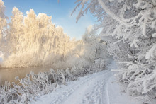 Snowy Winter. Frosty Winter Landscape With Hoarfrost On Plants And Trees. Amazing Winter Scene On Clear Morning. Christmas Background. Xmas Time. Frost And Snow In December. Snowy Nature.