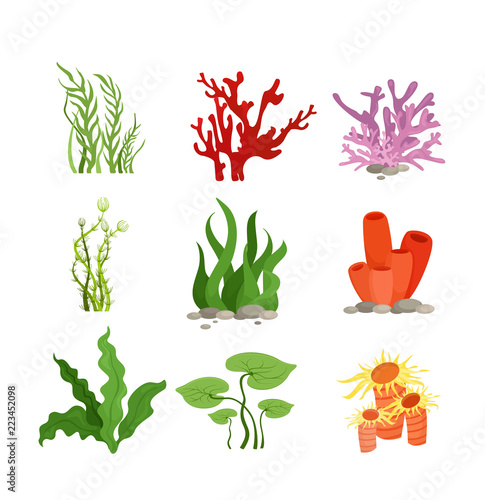 Fotografia, Obraz Vector illustration set of colourful water plants and coral isolated on white background in cartoon flat style