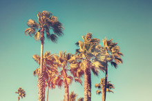 Palm Trees With Vintage Retro Color Effect