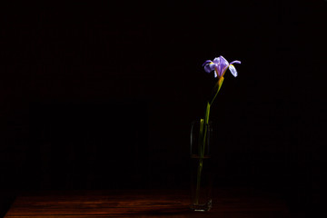 Lonely beautiful iris flower in a glass tall narrow vase on wooden table and black background with copy space