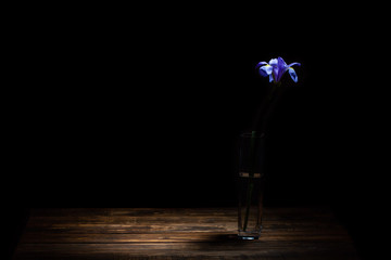 Beautiful iris flower in small vase on wooden table under spot light in the dark with copy space