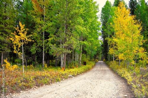 Fotografia, Obraz  Road in Glacier National Park