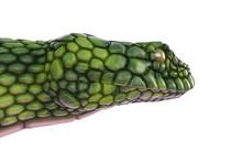 Giant Green Snake In A White B...
