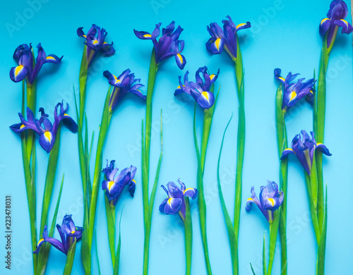 Foto op Plexiglas Iris Beautiful iris flowers on a blue background, celebration, greeting card, space for text