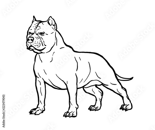 hand drawn sketch of american bully graphical dog isolated on white Mini Bully Pit hand drawn sketch of american bully graphical dog isolated on white background vector illustration for tattoo and printing