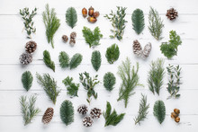 Fir Branch And Cones