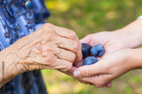 Tasty plums in human hands