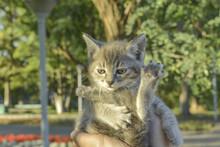 Little Kitten Shows Kung Fu