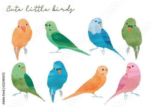 Photo 可愛い小鳥のセット