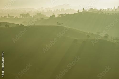 Fototapeta Dramatic scenery of tea plantations with fog in the morning, Bandung, Indonesia obraz na płótnie