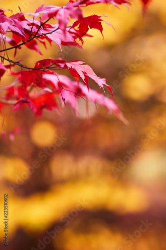 Foto  Autumn beech leaves decorate a beautiful nature bokeh background