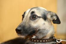 Cute Dog (dog, Scared, Frighte...