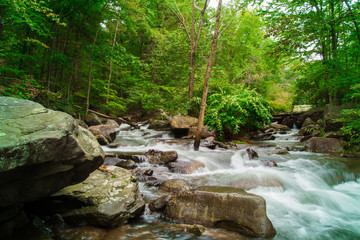 Fresh Water Stream Flowing Swiftly Over Rocky Forest Landscape