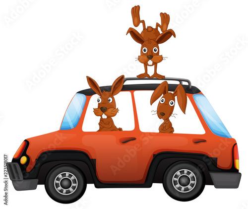 Keuken foto achterwand Kids Rabbit in the car