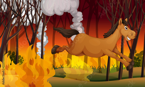 Fototapety, obrazy: Horse running away from a fire