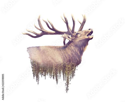 Elk and Forest. Watercolor Double Exposure effect Fototapeta