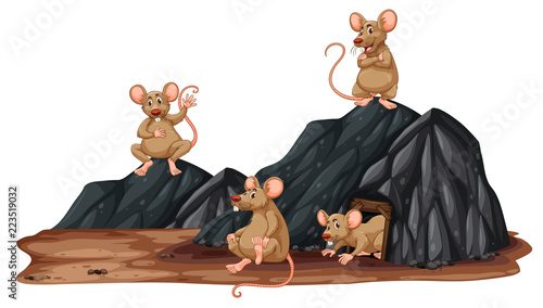 Keuken foto achterwand Kids A rat in a hole