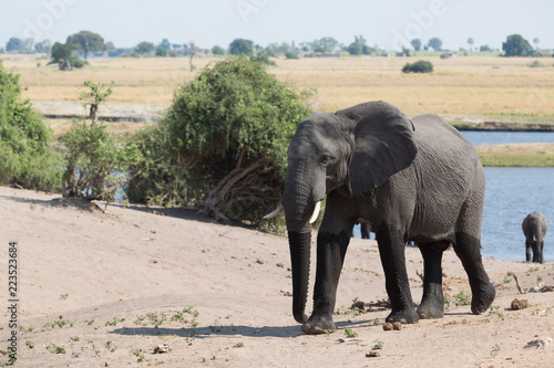 Canvas Prints Elephant elephant in africa in a group