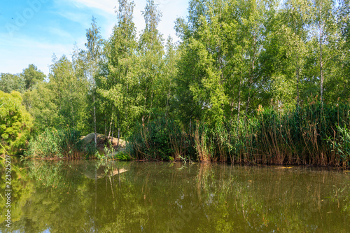 Small calm lake in green birch forest at summer