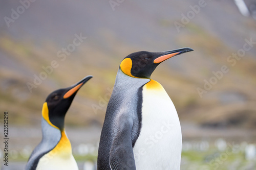 Tuinposter Pinguin penguin in the arctic