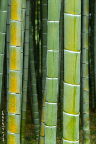 In de dag Bamboo bamboo forest, bamboo texture close-up