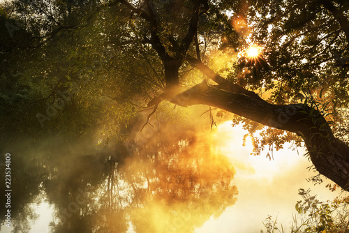 Printed kitchen splashbacks River Early misty gentle morning on the river. soft light and a tree above the water with rays of light through the branches.