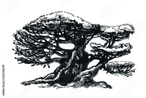 Fotografie, Obraz  Bonsai tree, drawing.