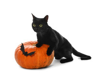 Cute Black Cat And Halloween Pumpkin On White Background