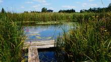 Landschaften Und Natur In Polen