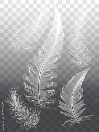 Białe pióra, zestaw elementów grafiki wektorowej