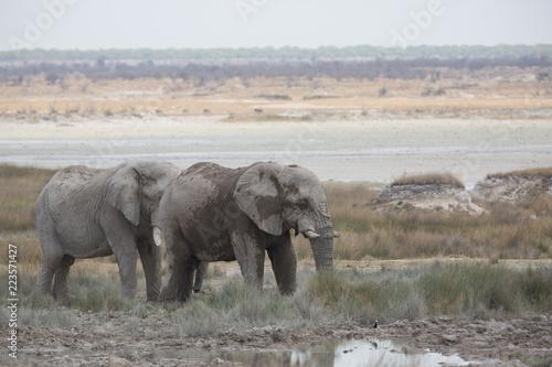 Fototapeta elephant in africa in a group obraz na płótnie