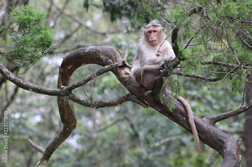 Foto op Plexiglas Aap Old monkey calmly sitting on the branch