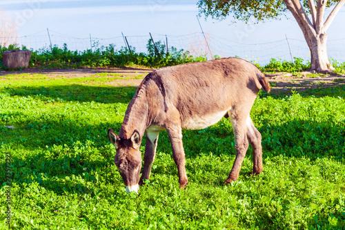 Deurstickers Ezel Cute Donkey Eating Green Grass near Lake