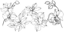 Vector Tropical Orchid Flower....