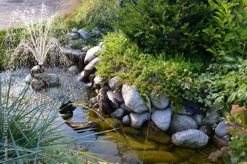 oczko wodne w ogródku