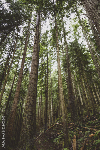 Low angle view of trees growing at Tiger Mountain State Forest