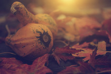 Close-up Of Squashes On Autumn...